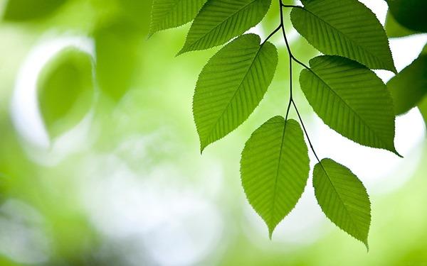 В.Р. Легойда: Вера в Бога — стимул для участия в экологической деятельности